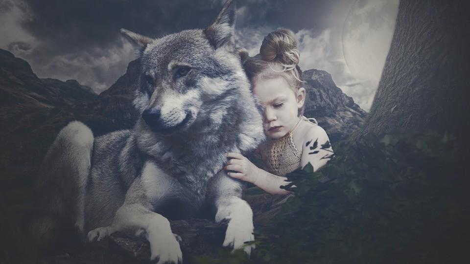 wolf-3581809_960_720